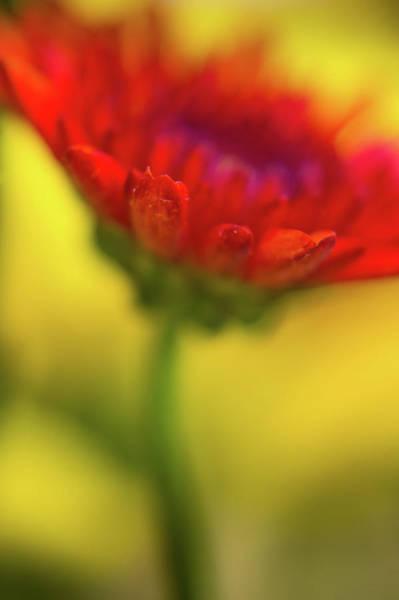 Photograph - The Color Of Sunlight by John De Bord