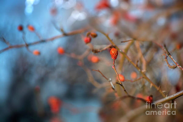 Photograph - The Color Of Winter by Susan Warren