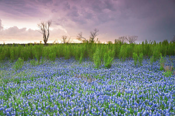 Wall Art - Photograph - The Colors Of Bluebonnet Field On A Stormy Day - Texas by Ellie Teramoto