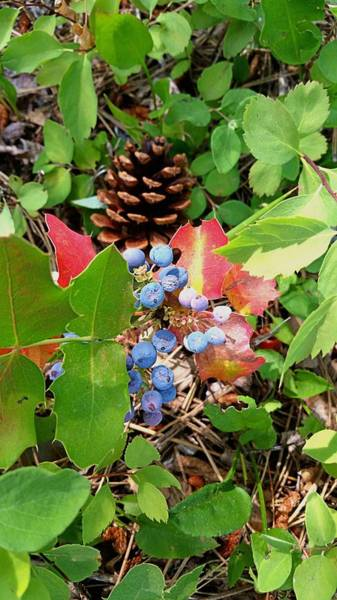 Photograph - The Colors Of Fall by Amanda Smith