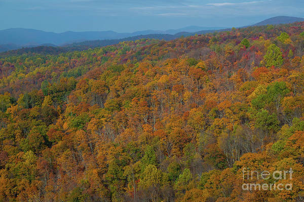 Shenandoah Wall Art - Photograph - The Colors Of Fall  by Michael Ver Sprill
