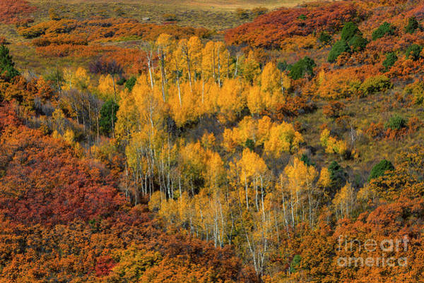 Wall Art - Photograph - The Colors Of Fall by Mike Dawson