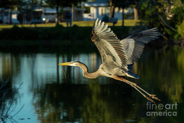 Wall Art - Photograph - The Colors Of Flight by Quinn Sedam