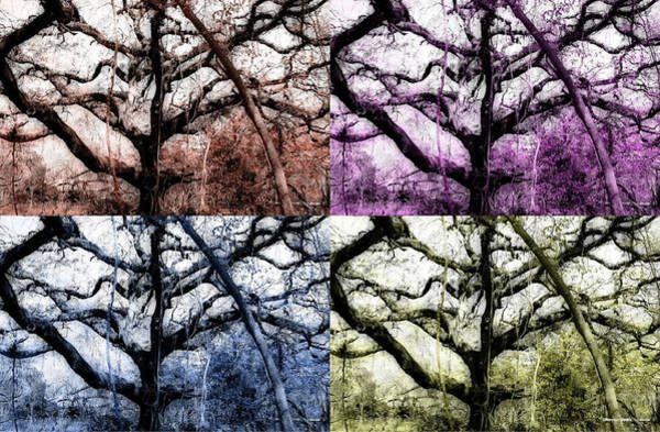 Prairie Home Digital Art - The Colors Of Limbs  by Shannon Sears