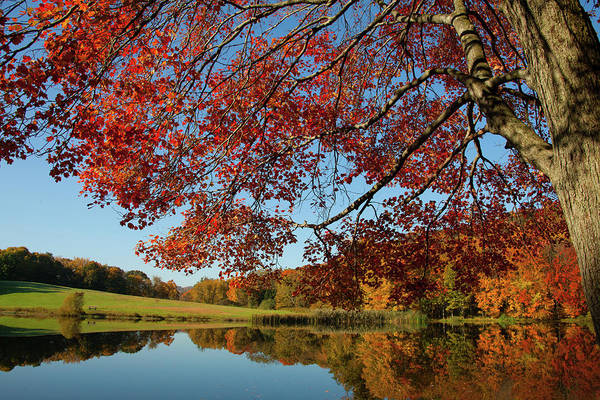 Wall Art - Photograph - The Comfort Of Autumn by Karol Livote