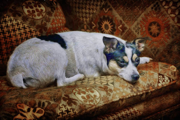 Breed Of Dog Photograph - The Comforts Of Home by Nikolyn McDonald