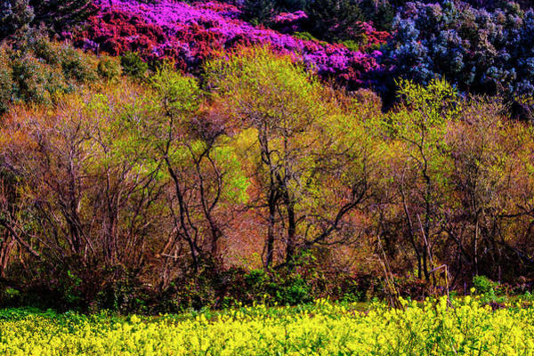 Half Moon Bay Photograph - The Coming Of Spring by Garry Gay