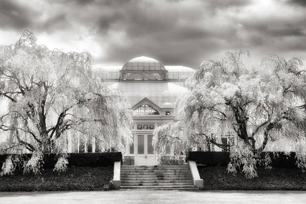 Photograph - The Conservatory Cherry Blossoms by Jessica Jenney