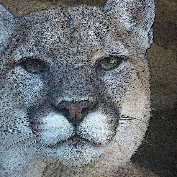 Mountain Lion Digital Art - The Cougar 3 by Ernie Echols