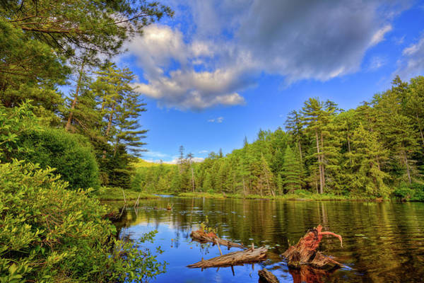 Photograph - The Cove At Nicks Lake by David Patterson