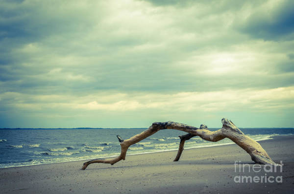 Toomer Wall Art - Photograph - The Cove by Melissa Fague