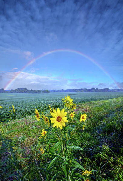 Photograph - The Covenant by Phil Koch