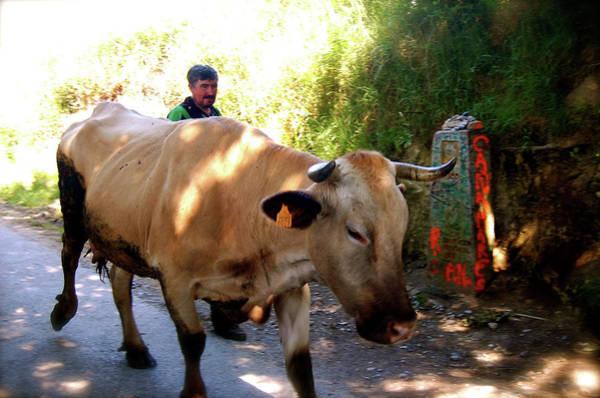 Photograph - The Cowherd by HweeYen Ong