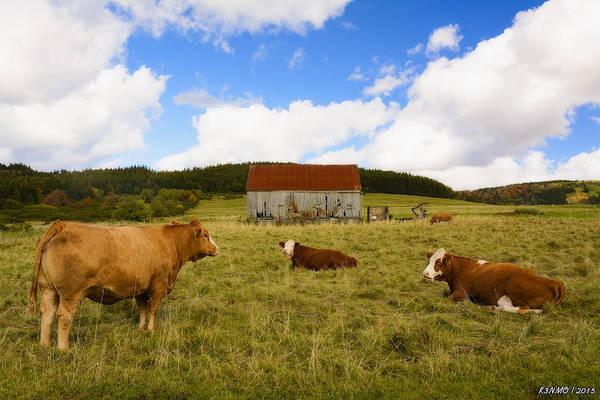 Ken Morris Digital Art - The Cows Of Mabou by Ken Morris