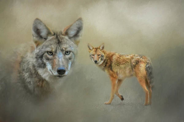Photograph - The Coyotes Of Shiloh by Jai Johnson
