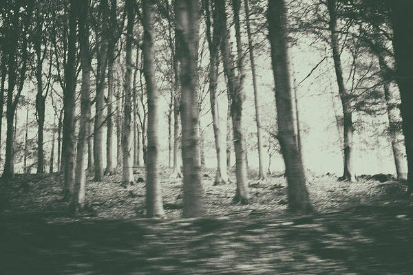 English Countryside Photograph - The Creepy Woods by Martin Newman