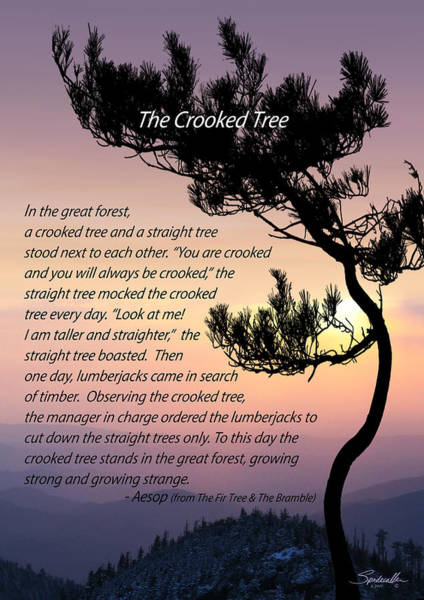 Wall Art - Digital Art - The Crooked Tree by M Spadecaller
