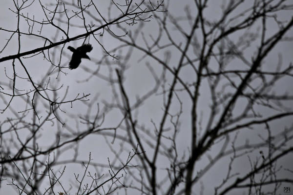Photograph - The Crow by John Meader