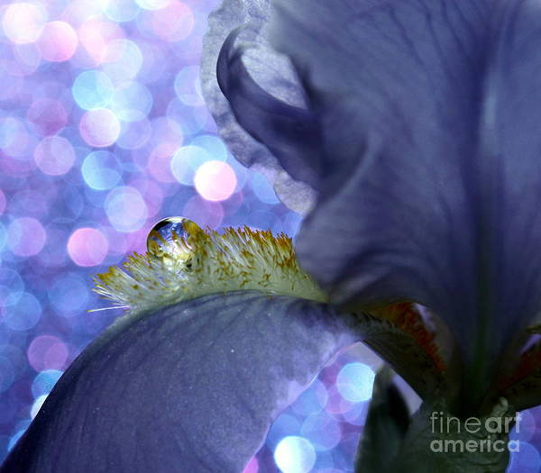 Exquisite Photograph - The Crystal Ball Of Nature by Krissy Katsimbras