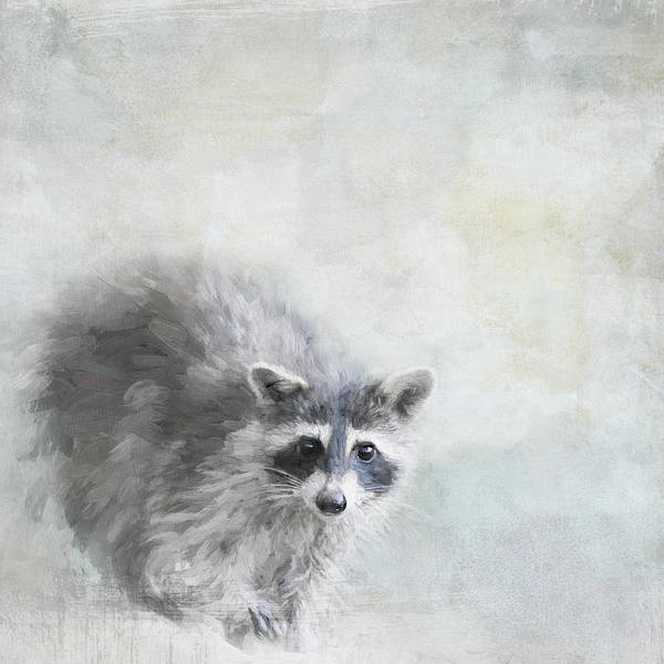 Photograph - The Curious Raccoon by Jai Johnson