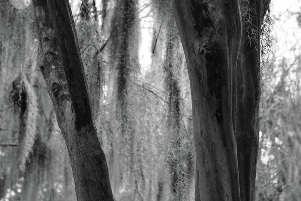 Photograph - Cypress In The Bayou by Jenny Regan