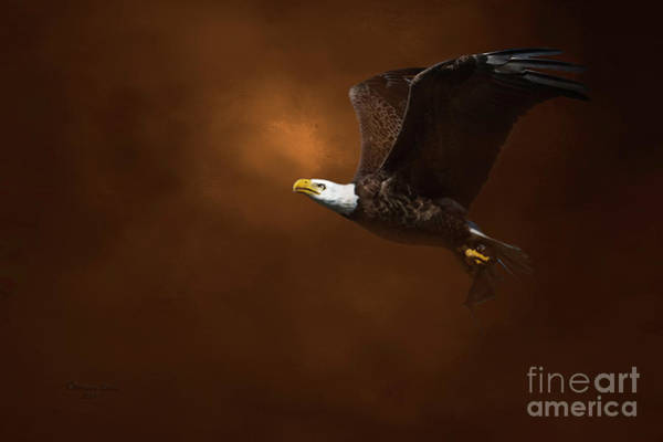 Soar Photograph - The Daily Catch by Marvin Spates