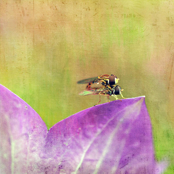 Wall Art - Photograph - The Dance Of The Hoverfly by Cindi Ressler