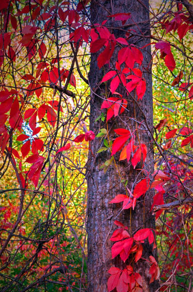 Photograph - The Dangling Leaves by Tara Turner