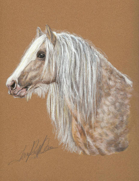 Pastel - The Dappled Gypsy Romeo by Terry Kirkland Cook