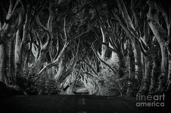 Photograph - The Dark Hedges by David Lichtneker