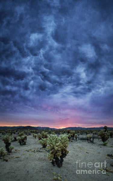 Brewing Photograph - The Dark Sunset 2 by Michael Ver Sprill