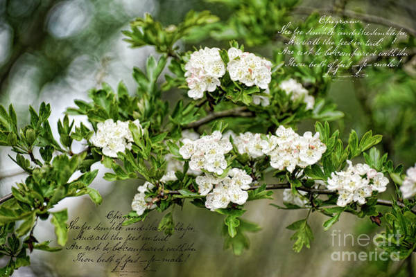 Photograph - The Darling Buds Of May by Brenda Kean