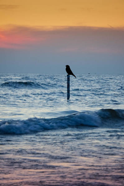 Wall Art - Photograph - The Day Ends by Art Spectrum