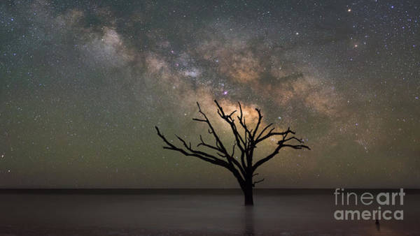 Wall Art - Photograph - The Dead Forest Milky Way  by Michael Ver Sprill