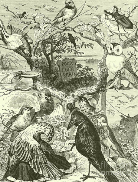 Black And White Nature Drawing - The Death And Burial Of Cock Robin by English School