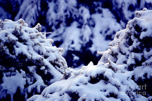 Photograph - The Deep Blue - Winter Wonderland In Switzerland by Susanne Van Hulst