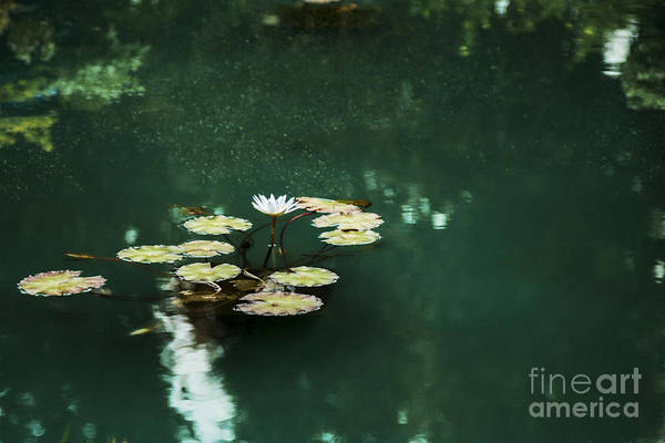 Wall Art - Photograph - The Depths Of Lily by Margie Hurwich