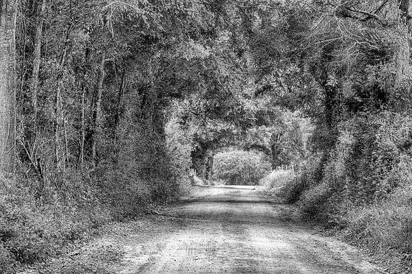 Wall Art - Photograph - The Dirt Road Tunnel Black And White by JC Findley