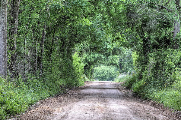 Wall Art - Photograph - The Dirt Road Tunnel by JC Findley
