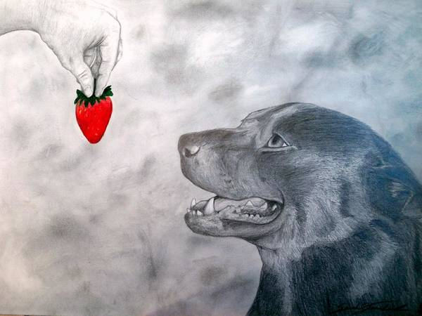 Black Lab Mixed Media - The Dog And The Strawberry by Sarah Stanaland