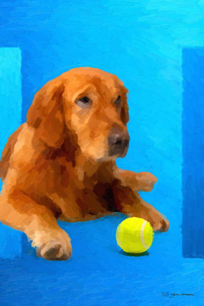 Golden Retriever Digital Art - The Dog Park - Mahogany American Golden Retriever Over Blue Canvas by Serge Averbukh