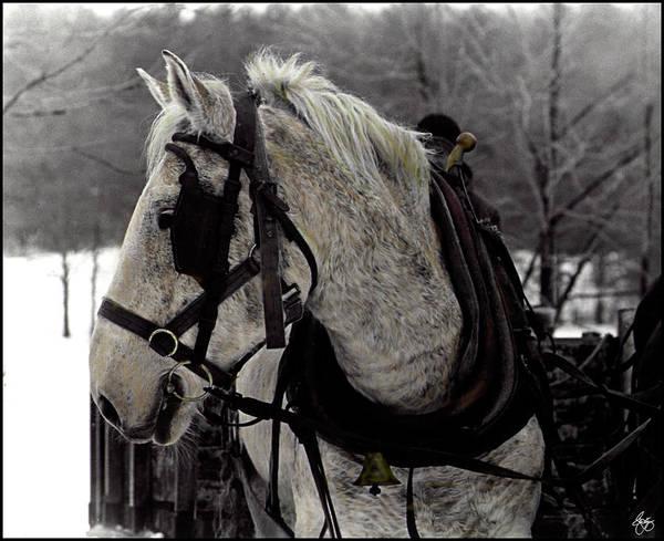 Photograph - The Draft Horse by Wayne King