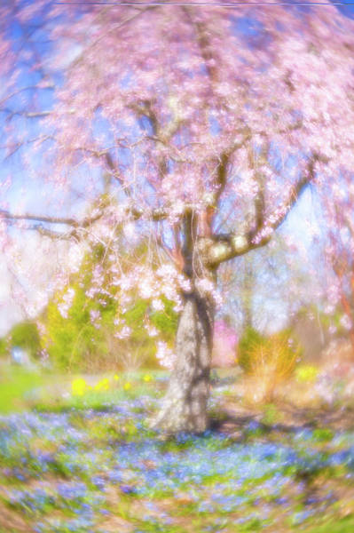 Photograph - The Dream Tree by Brian Hale