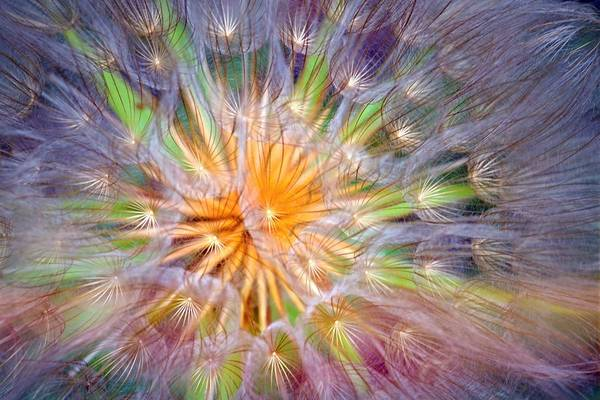 Dandelion Puff Photograph - The Dreams Of Dandelions by Tara Turner