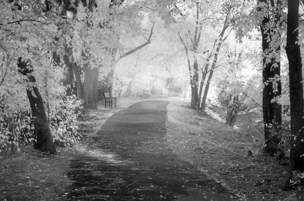 Photograph - The Dreams Of October by Tara Turner