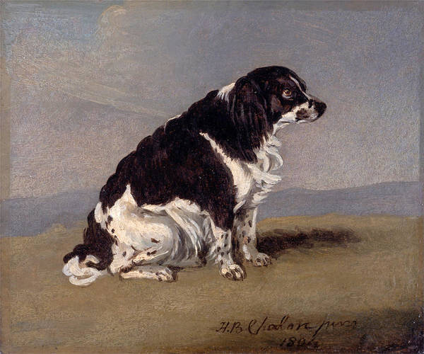 Wall Art - Painting - The Duchess Of York's Spaniel by Henry Bernard Chalon