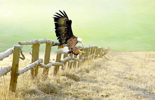 Talon Photograph - The Eagle Is Landing by Laura D Young