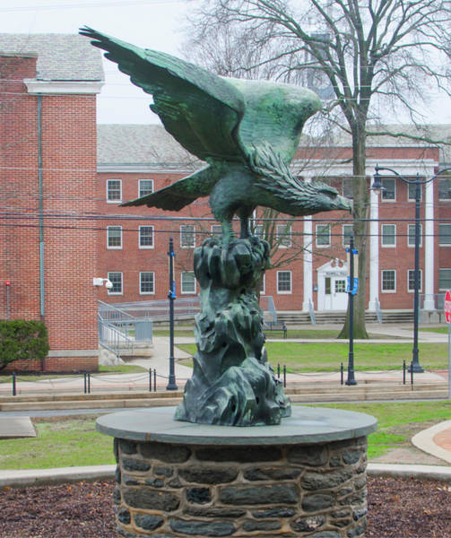 Photograph - The Eagle - Widener University by Bill Cannon