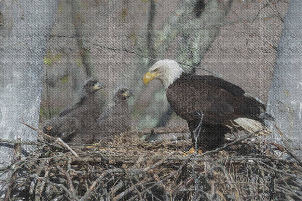 Photograph - The Eaglets by Dan Friend