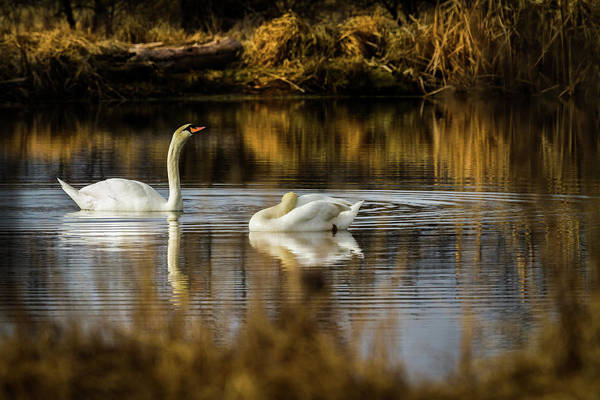 Swan Valley Photograph - The Elegance Of Nature by TL Mair